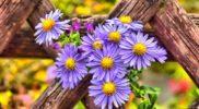 Pixabay-purple